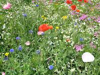 Rural Dorset flora